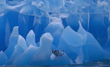 обоя животные, пингвины, вода, лед, стая