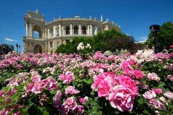Картинка одесский+национальный+академический+театр+оперы+и+балета города -+здания +дома одесса украина театр цветы розы кусты