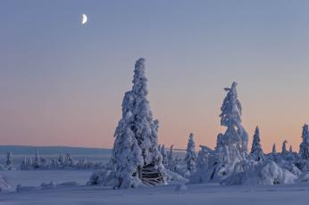 Картинка природа зима деревья снег швеция вестерботтен лапландия