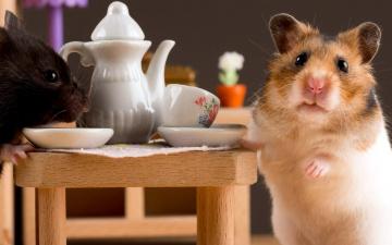Картинка животные морские+свинки +хомяки чашки чаепитие чайник стол хомяки блюдца