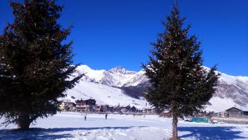 обоя города, - пейзажи, елки, снег, горы, зима, шишки