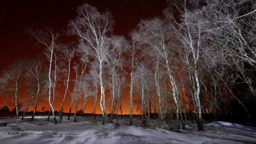 обоя природа, зима, деревья
