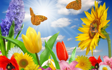 обоя разное, компьютерный дизайн, гиацинт, тюльпаны, ромашки, лучи, одуванчик, облака, небо, маки, подсолнух, бабочки, цветы