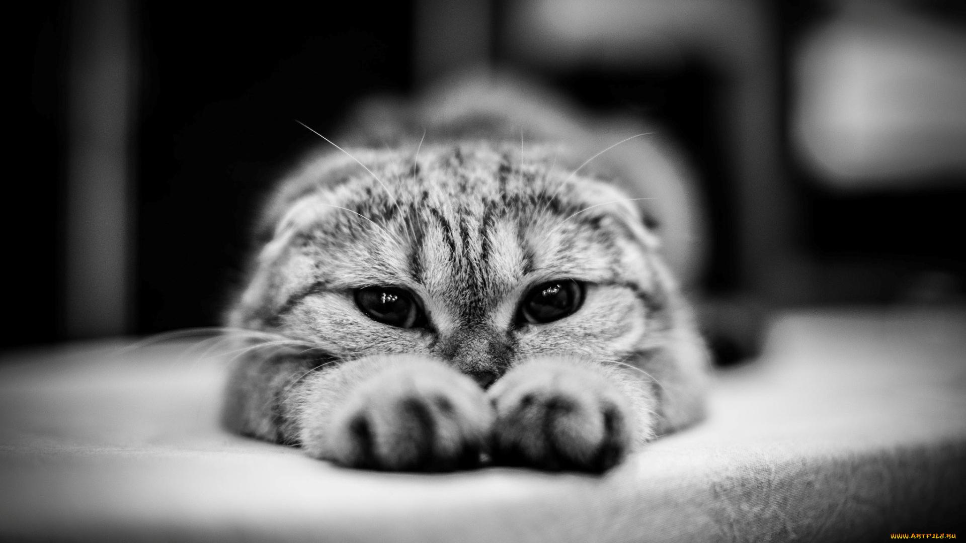 конструкция заметно фото на аву грустные котики уже