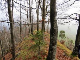 обоя природа, лес, холм, осень