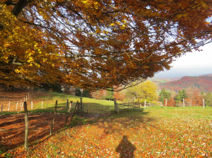 обоя природа, пейзажи, осень, дерево, забор