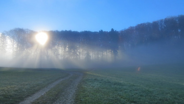 обоя природа, дороги, туман, лес