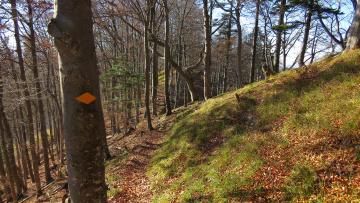 обоя природа, лес, осень