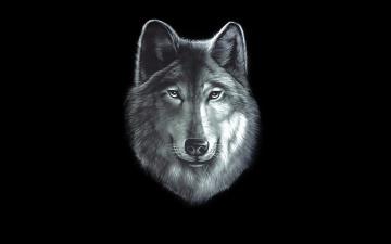 Картинка волк рисованное животные +волки голова wolf черный фон