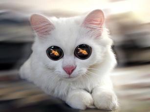 Картинка юмор приколы кот