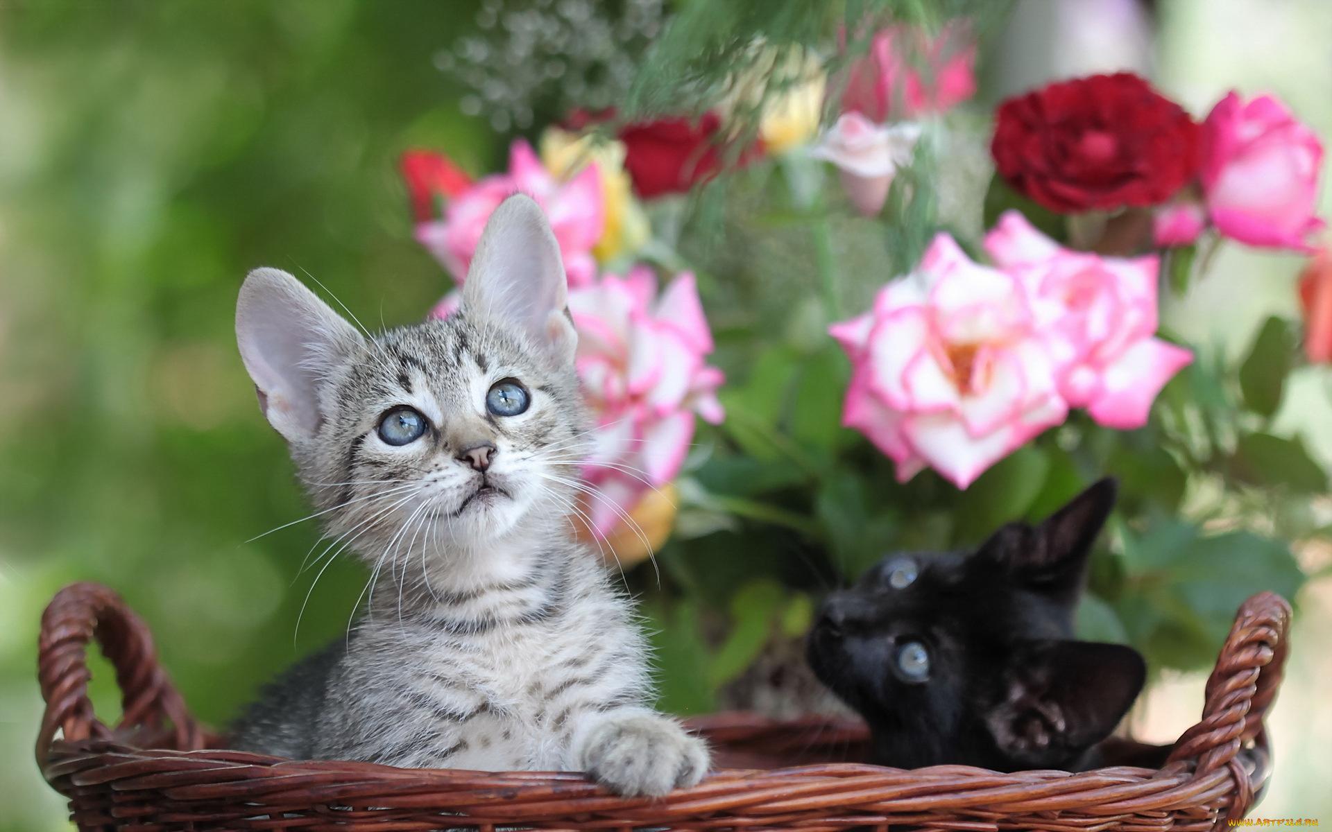 Цветы и коты картинки, годовщину свадьбы года
