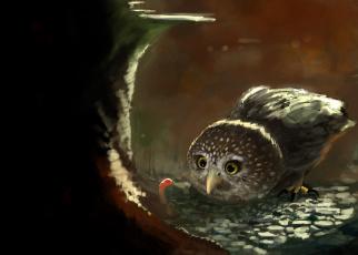 обоя рисованное, животные, совёнок, сова, червяк, птица