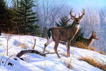 обоя рисованное, животные, лес, снег, зима, рога, олени