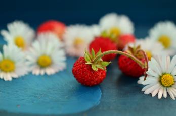 обоя еда, клубника,  земляника, земляника, ягоды, маргаритки