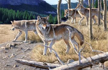 обоя рисованное, животные, волки, хищники, бревно, лес, стая