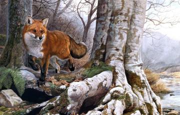 обоя рисованное, животные, плутовка, рыжая, лиса, корни, дерево