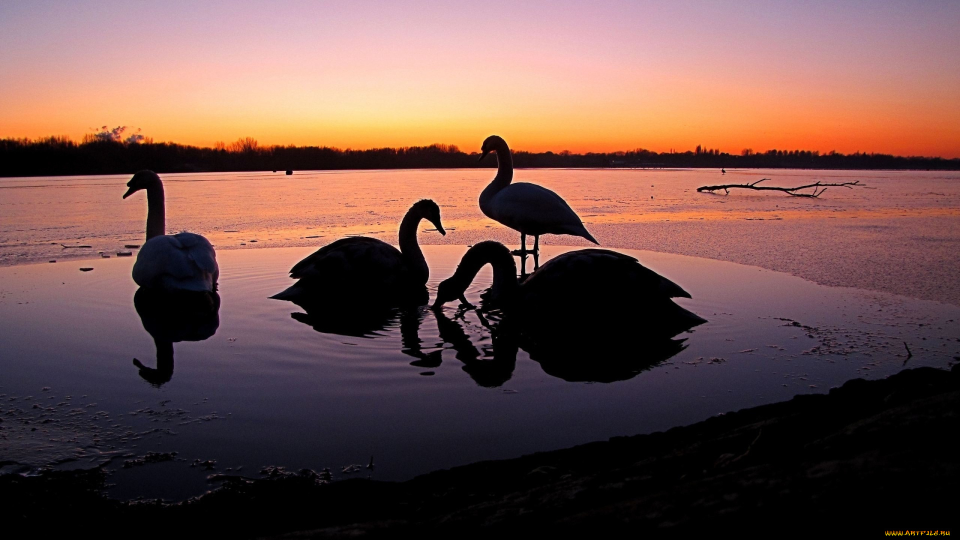 Закат и лебедь скачать
