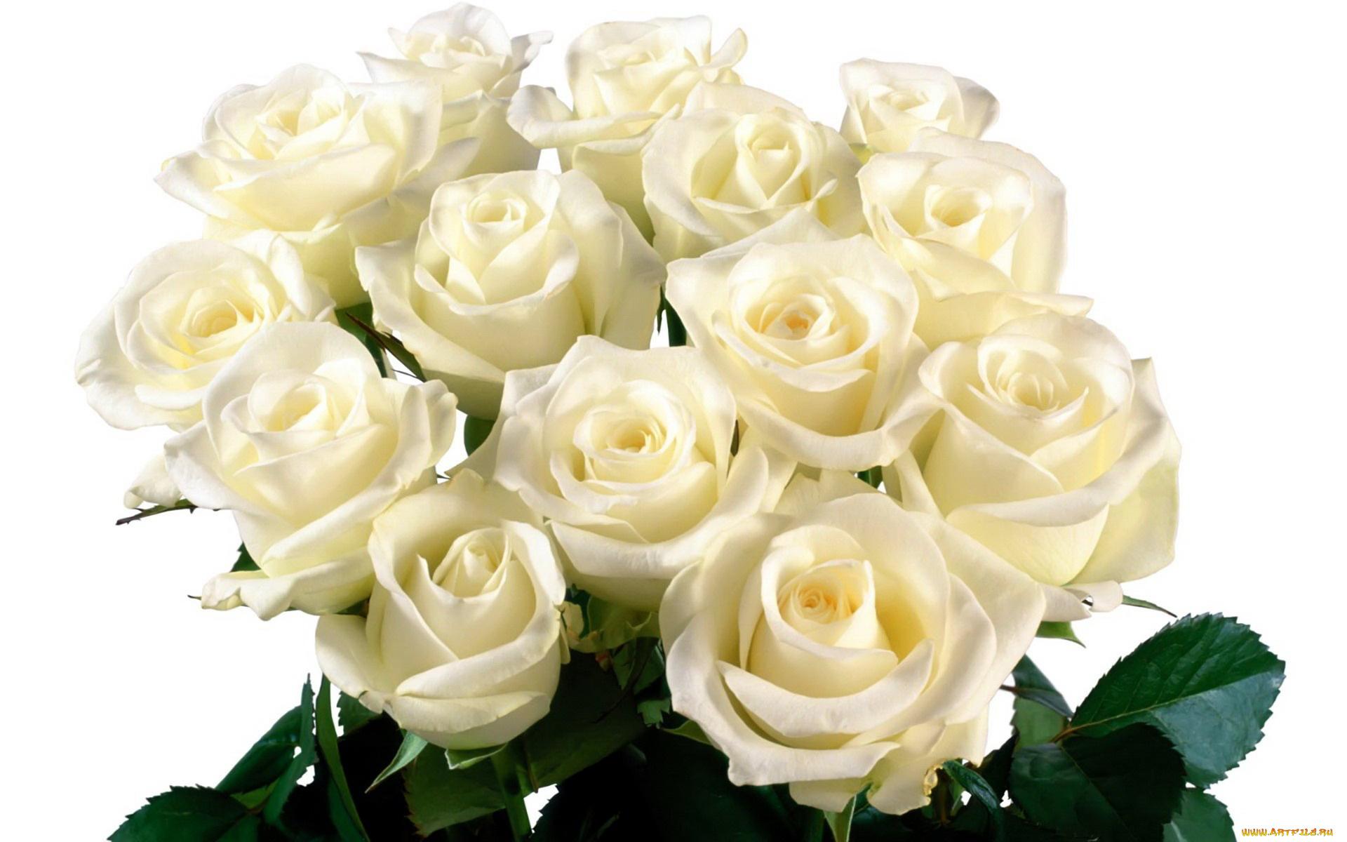 Открытка розы белые фото