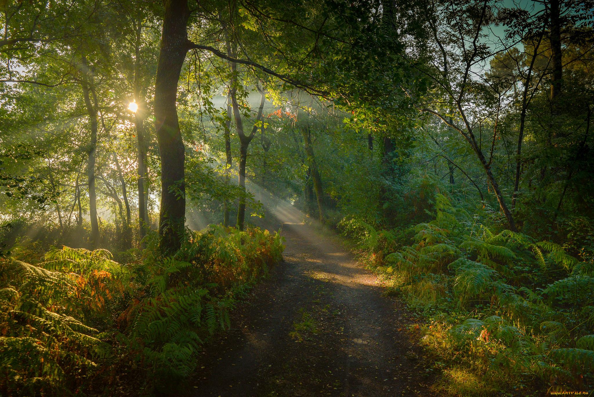 лес лучи солнце дорога бесплатно