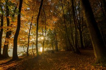 обоя природа, дороги, река, лес