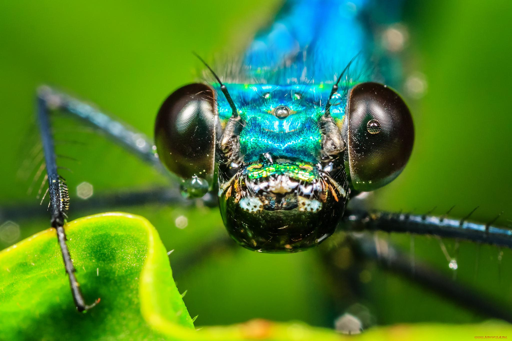 природа макро насекомое глаза бесплатно