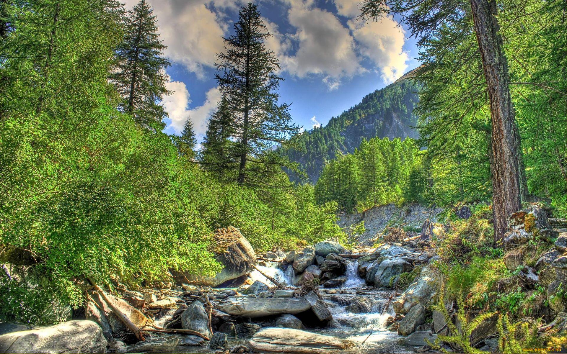горы лес ручей бесплатно