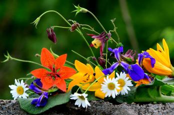 Картинка цветы разные+вместе аквилегия ромашки лилии