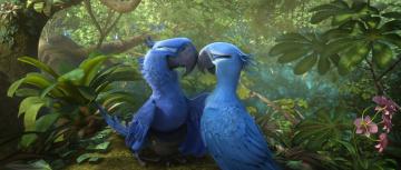 Картинка мультфильмы rio+2 попугаи