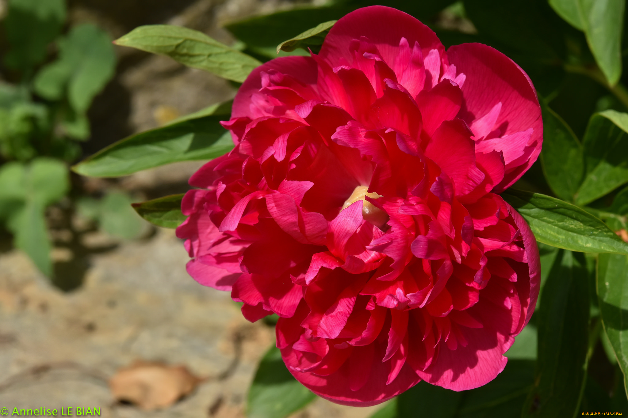 цветы с каплями фото