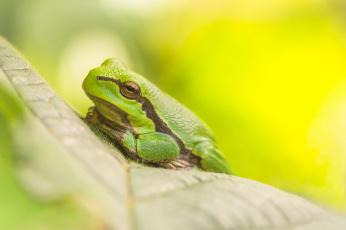 обоя животные, лягушки, отдых, трва, природа, трава, лягушка