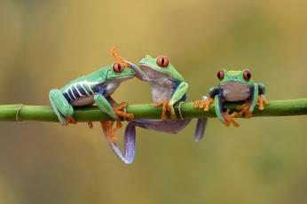 обоя животные, лягушки, природа, фон, лягушка