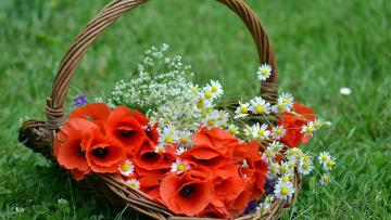 Картинка цветы разные+вместе ромашки маки
