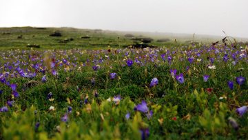 обоя природа, луга, цветы, луг, весна
