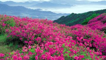 обоя природа, луга, горы, цветы, луг