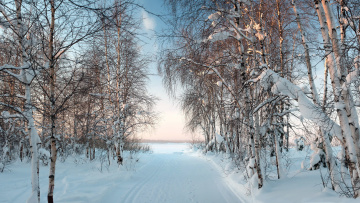 обоя природа, зима, березы, снег, дорога