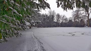 обоя природа, зима, следы, деревья, снег