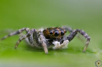 обоя животные, пауки, паук, глазки, насекомое, лапки