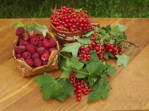 обоя еда, фрукты,  ягоды, август, угощение, стол, натюрморт, малина, красная, смородина, урожай, ягоды