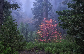 обоя природа, лес, простор