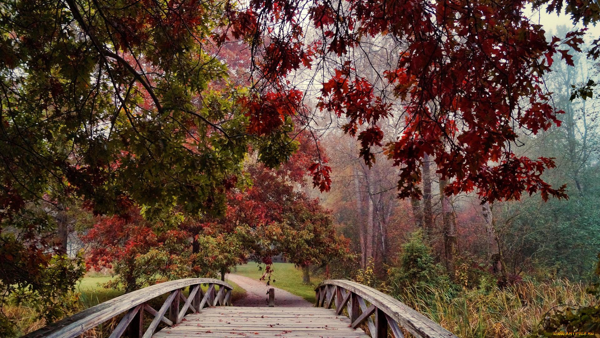 Мостик в опавших листьях смотреть