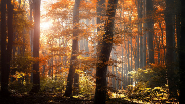 Картинка природа лес осень