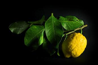 Картинка еда цитрусы ветка лимон