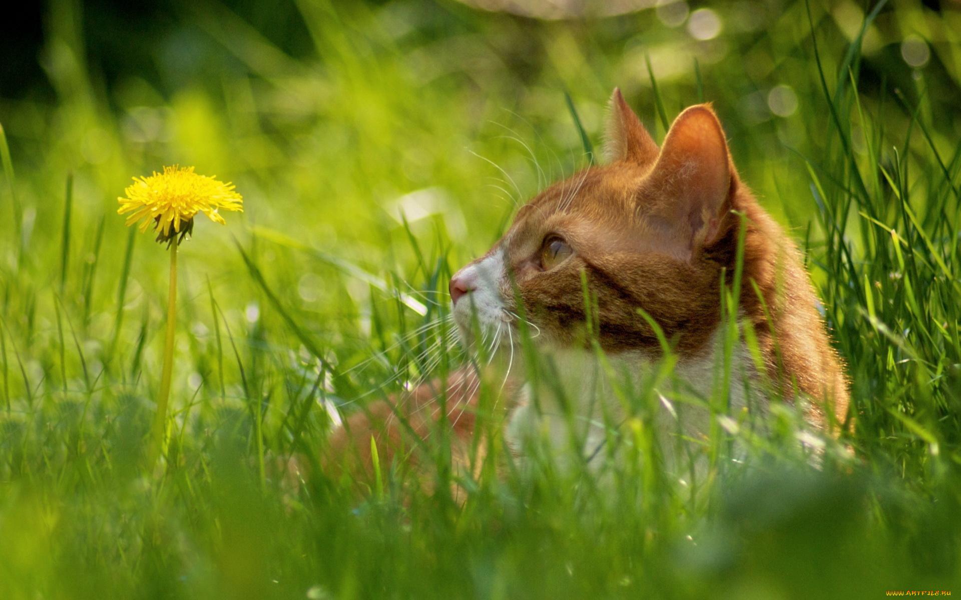 Котенок на траве  № 2959651 загрузить