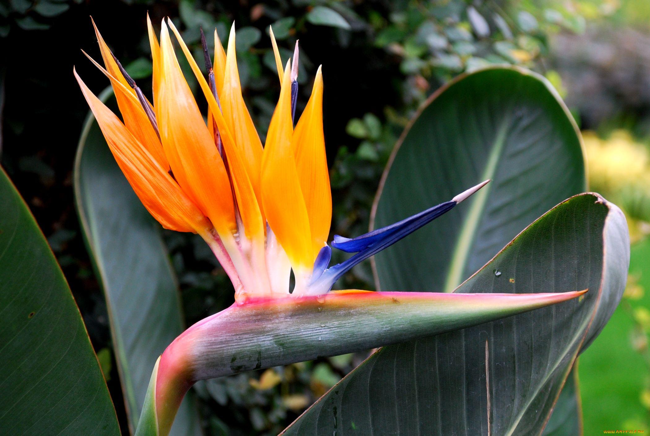 Для, экзотические цветы открытки