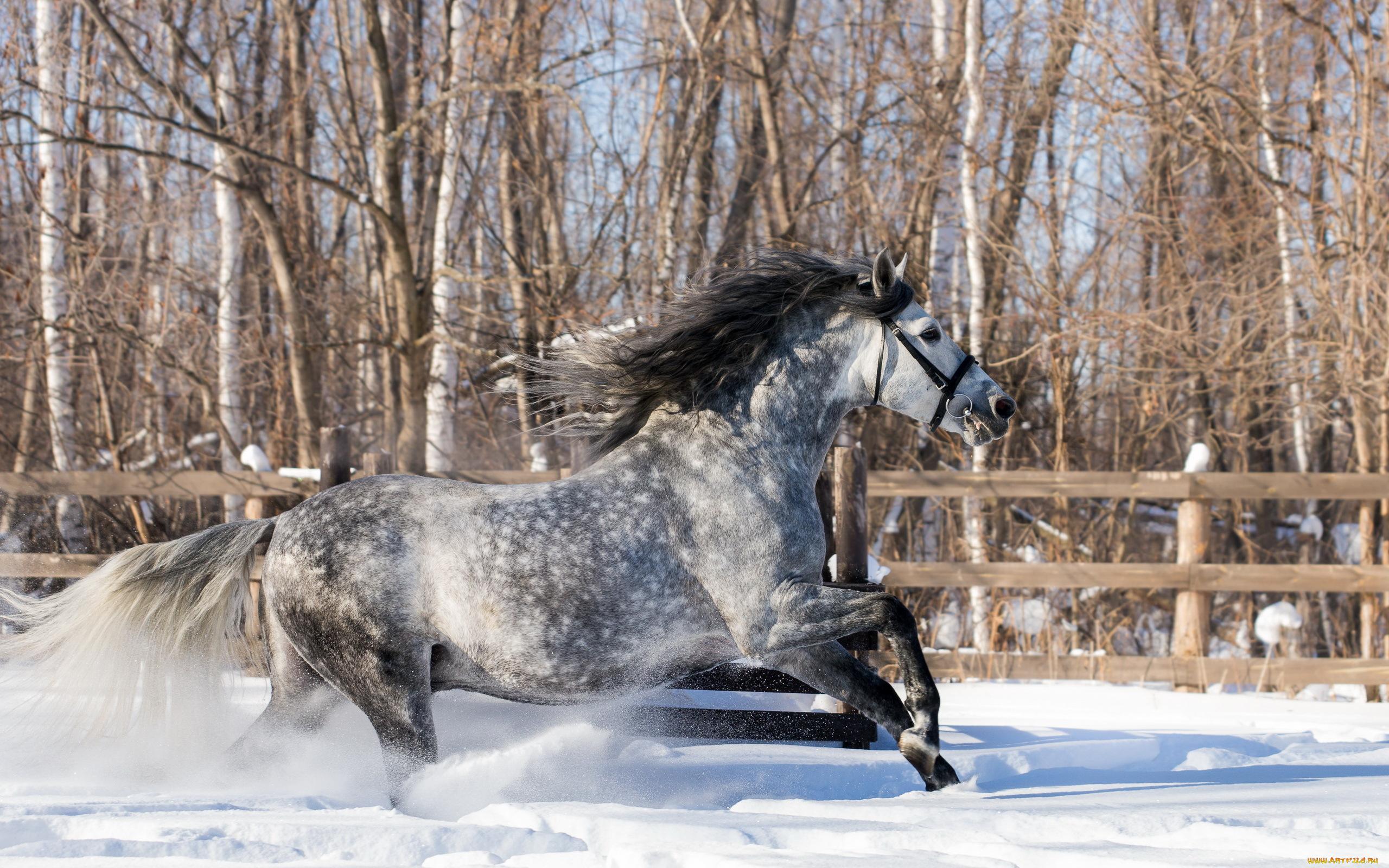 обои для рабочего стола зимние лошади № 465233 загрузить