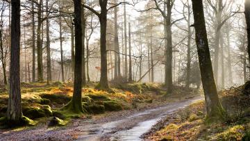 Картинка природа дороги дорога туман лес утро