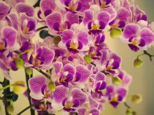 Картинка цветы орхидеи фиолетовые