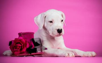 Картинка животные собаки щенок розы