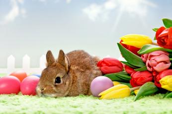 обоя праздничные, пасха, яйца, кролик