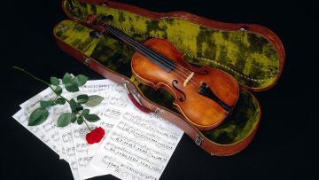 обоя музыка, -музыкальные инструменты, роза, футляр, ноты, скрипка